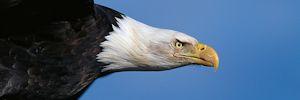 Printable DOPE 4 Bird Personality Test (PDF eBook)