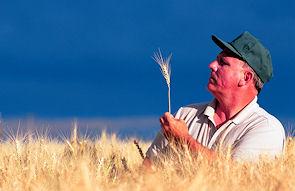 farmer-inspecting-wheat-online-self-assessment-test-richardstep
