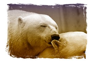 life-lessons-polar-bear-196318_640